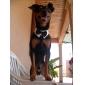 강아지 매다/보타이 강아지 의류 웨딩 블랙 코스츔 애완 동물