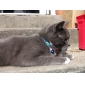 Sequined Leather Collar with Bell For Pets Dogs (Assorted Color)