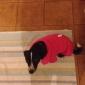 Собака Футболка Одежда для собак На каждый день Сплошной цвет Розовый Красный Синий Розовый