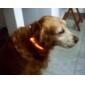colar de cachorro luzes led ajustável / nylon retrátil vermelho verde azul rosa