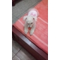 Dog Shirt / T-Shirt Dog Clothes Breathable Bowknot Pink Costume For Pets