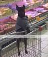 강아지 후드 강아지 의류 문자와 숫자 그레이 면 코스츔 애완 동물 남성용 여성용 캐쥬얼/데일리 스포츠